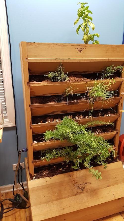 Indoor Herbs 2017